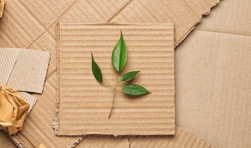 Studie ProCarton Umweltfreundliche Verpackungen