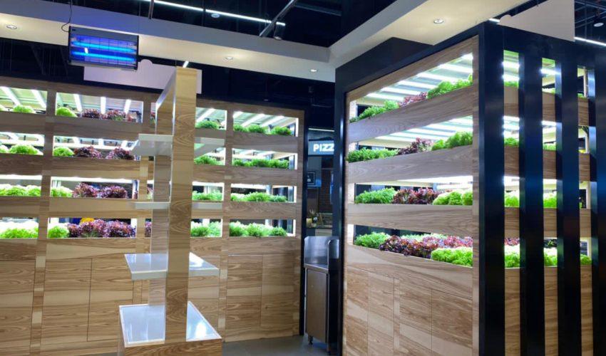 Wanzl Hypermarkt VAE Salatplantage
